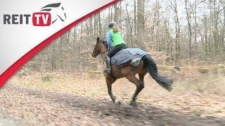 Pferdegesundheit   Konditionstraining im Wald mit REITTV-Teamreiterin Jana