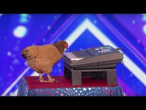Jokgu of Flockstars Chicken Plays Keyboard America's Got Talent 2017