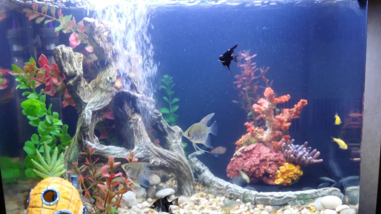 review Acurel F aquarium clarifier 3 days of use