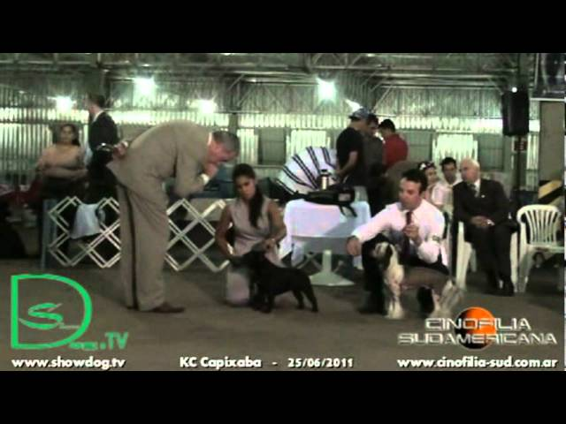 Show Dog - G9 adulto KCCapixaba junho 2011 Travel Video
