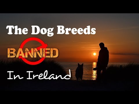 10 dogs banned in Ireland