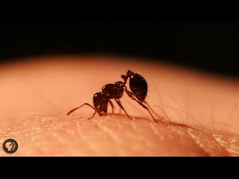 Inside The World Of Fire Ants!