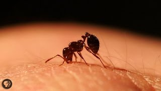 Inside the World of Fire Ants! by : It's Okay To Be Smart