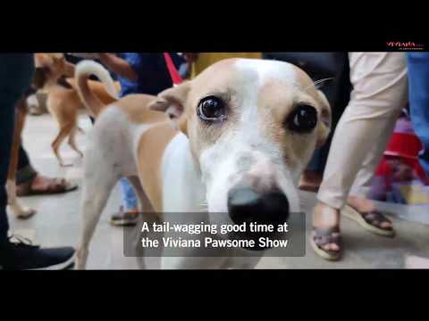 The Pawsome Show 2019 At Viviana Mall