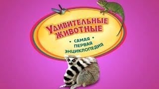Хочу Знать ВСЕ! Удивительные Животные - Детская Энциклопедия ♥ Мультик Игра ♥ #хочузнать