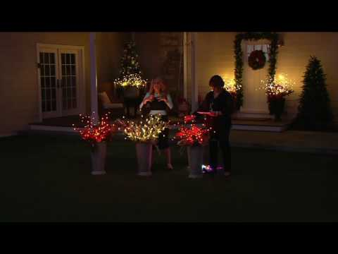 Set of 3 Decorative LED Light Up Branches by Lori Greiner on QVC