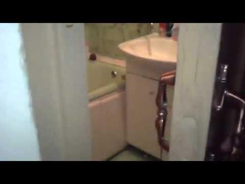 Do Not Disturb Cat Closes Door In Bathroom For Privacy