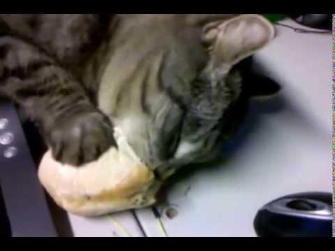 manche katzen wollen auch mal brot fressen verdammt war das gut youtube. Black Bedroom Furniture Sets. Home Design Ideas
