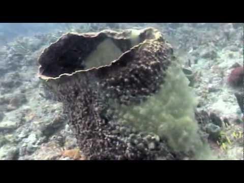 Barrel Sponge Disease