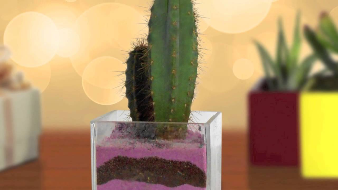 Bomboniere Con Piante Grasse, Cactus Nad   Nad Nature Art Design   YouTube