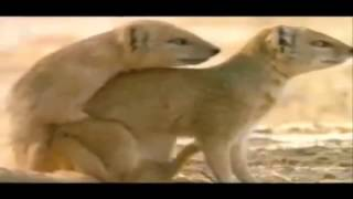 Very Funny Video   Hot Compilation with Funny Animals