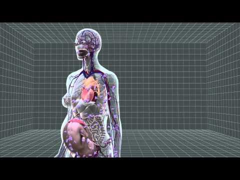 Poliklinika Harni - Prevalencija gestacijskog dijabetesa u SAD do 9,4%