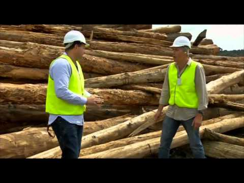 Going Bush 5  Episode 1  The story of one tree, biodiversity of Coffs Harbour and bush safety.