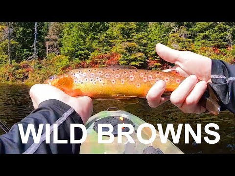 Kayak Fishing Brown Trout In TINY LAKE - Vancouver Island, BC