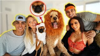 DRESSING OUR PUPPPIES in the FUNNIEST COSTUMES!