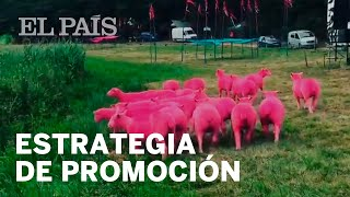 El Festival Latitude acusado de maltrato animal por teñir de rosa a varias ovejas