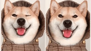 That's Why I Have A Dog, Lovely Dogs Cute Funny dogs Cute Animals Compilation 2018
