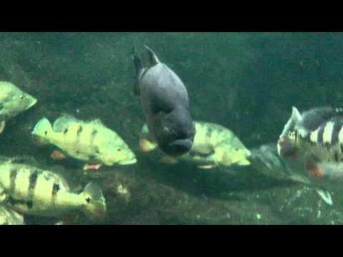 Piranha Aquarium (Aquarium Berlin)