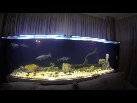 Cold Water Trout Tank