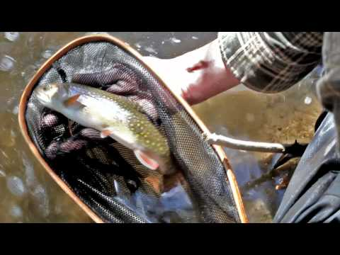 Downstream ~ Testing Trout - Fly Fishing Trailer