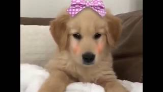 World's cutest dogs compliation video. The best drug are cute dogs....
