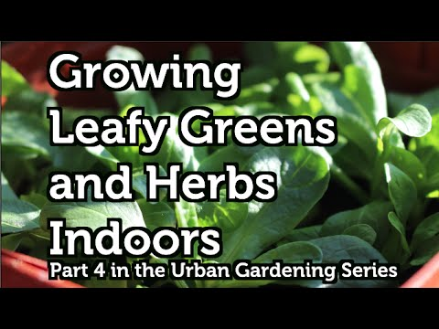 Grow Leafy Greens and Herbs All Year Anywhere