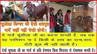 सुशीला किन्नर की अद्भुत गायों का देखें प्रेम भाव, Look love Emotion at the wonderful cows of Sushila