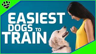 Easiest Dog Breeds to Train  10 Smartest Dog Breeds