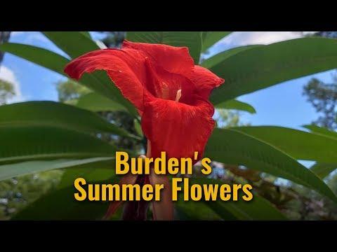 Burden's Summer Flowers