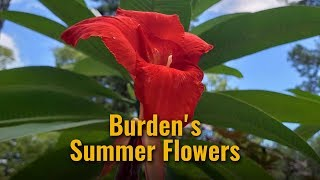 Burden's Summer Flowers