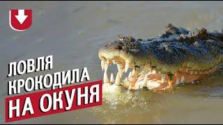 Ловили окуня, а поймали крокодила. Забавная рыбалка из Австралии