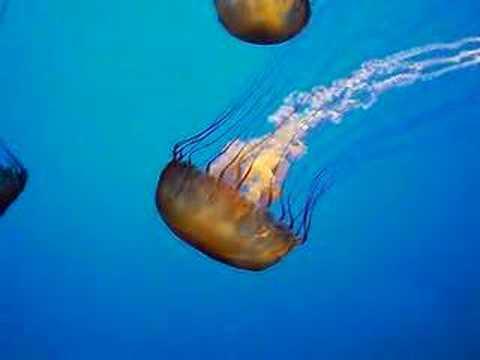 How do jellyfish swim? | Earth | EarthSky