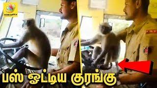 பஸ் ஓட்டும் குரங்கு - அதிர்ந்து போன பயணிகள் : Monkey Driving Bus in Karnataka   Viral Video