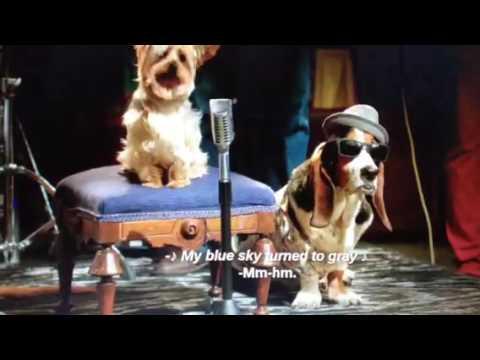 Pup Star-Blue Blue Sky/Bloodhound Blues