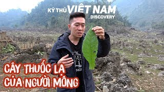 Cây thuốc lạ của người Mông [Tập 3] Kỳ Thú Việt Nam Discovery