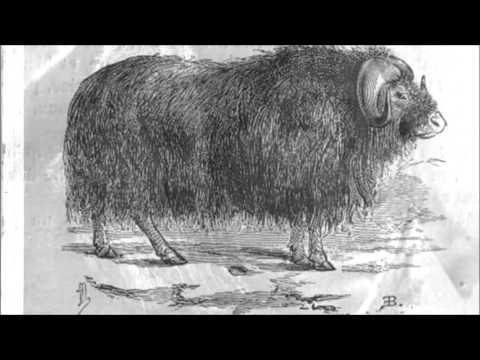 Le Nunavut en 120 secondes