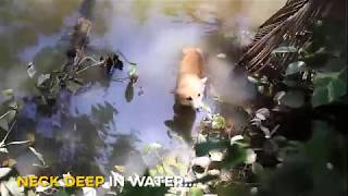 Bringing HOPE to Flood-Afflicted Animals in Kerala!