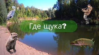 Рыбалка 30 августа на реке и озере Ловля щуки на живца и на виброхвост