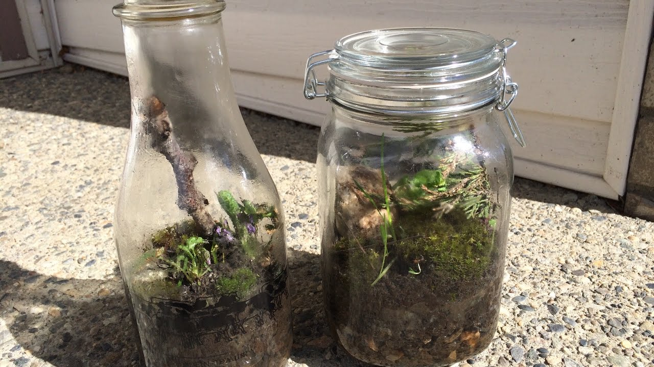 How To Build A Closed Terrarium Youtube