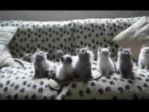 Кошки приколы – 8, прикольное видео, обхохочешься!!!!! Позитив!!!