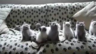 Кошки приколы - 8, прикольное видео, обхохочешься!!!!! Позитив!!!