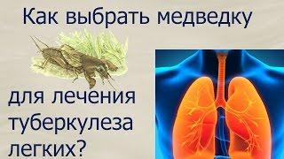 Как правильно выбрать медведку для лечения туберкулеза легких(В этом видео мы поближе познакомимся со способом лечения туберкулеза с помощью медведки. Стоит пробовать..., 2016-05-31T20:47:10.000Z)