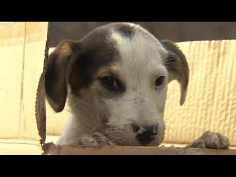 Sochi stray dogs saved by Russian billionaire Oleg ...