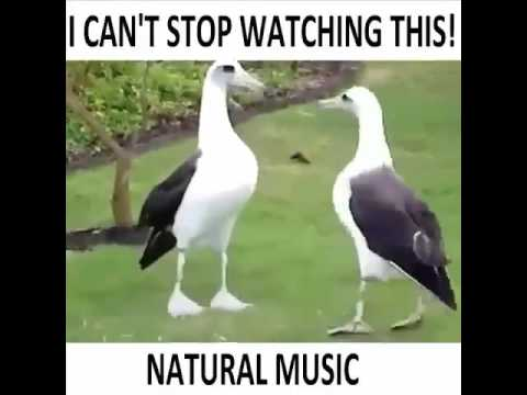 Natural music This guys are talented