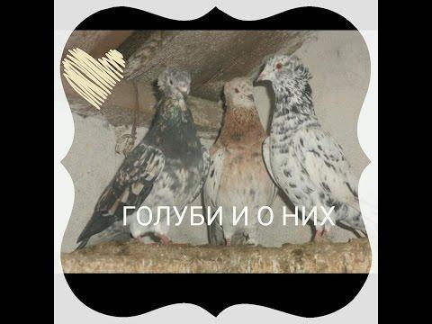 Мраморные муз.ю.сотник фото михаила город Сальск и наиля город Казань