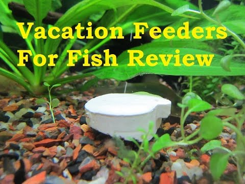Fish Vacation Feeders Review
