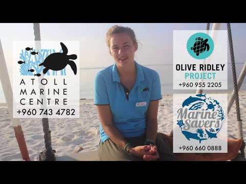 Turtle Rescue Guide by Atoll Marine Centre