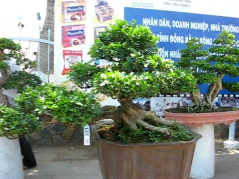 Bonsai TP Mỹ Tho Tiền Giang (tt) 19/04/2010