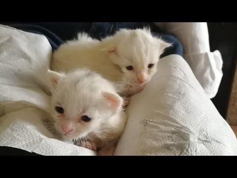 Rescatan dos crías de gato de un contenedor de Meira