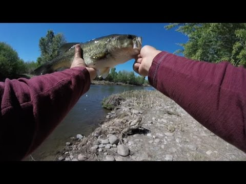 Arizona gila river bass fishing how just how youtube for Gila river fishing